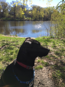 Our barketing director at Memory Lane Pond in Crystal, MN.