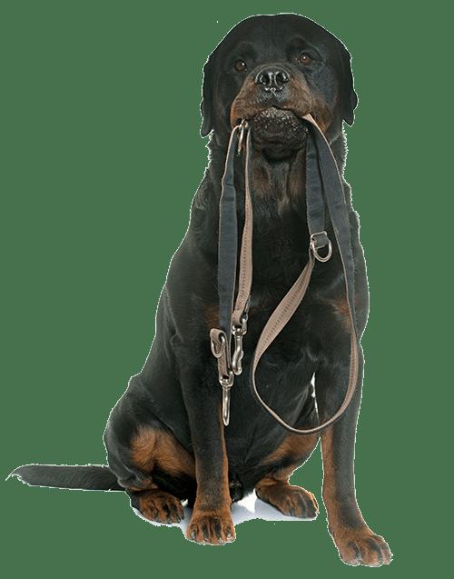 Dog Walking - Pup Culture